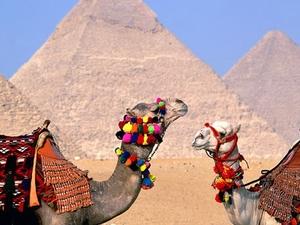 Tour Egypt Photos