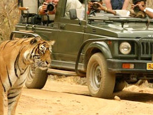 Jungle Safari tour Photos
