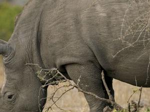 Gorilla tour in Uganda and wildlife for 10 days 2014 Photos