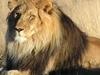 African Glorious Safaris