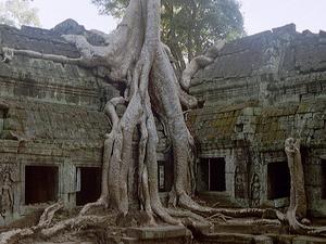 Capital & Angkor Tour 5 Days/ 4 Nights Photos