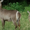 Arabuko Sukoke Forest National Park