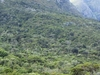 Afromontane Forest
