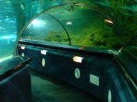 Kelly Tarlton's Underwater World