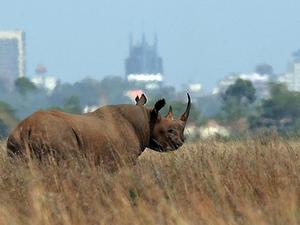 Nairobi City Tours   Nairobi National Park Tour - 4 Hours Photos