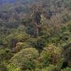 Parque Nacional Amboró
