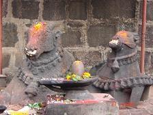 Bull At Bhimashankar Temple