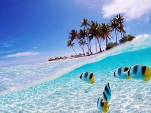 Amazing Seascape Manado Package Photos