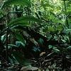 Bung Hatta Forest Reserve