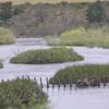 Breede River In The Park
