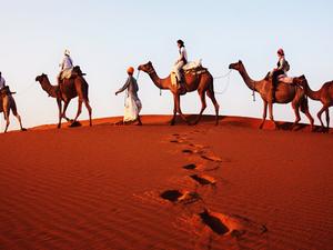 2 Nights / 3 Days Tour to Thar Desert Photos