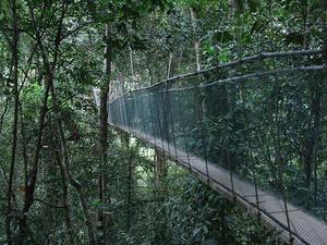 Kinabalu Park Canopy Walkway and Poring Hot Springs Full-Day Tour from Kota Kinabalu Photos