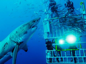 Shark Cage Dive | Cape Town Photos