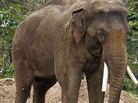 Chandaka Elephant Sanctuary