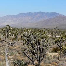 Clark Mountain Range