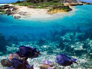 Bangkok Pattaya Coral Island Tour Photos