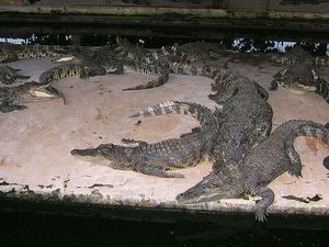Mamba Village Visit (Crocodile Farm Tour) Photos