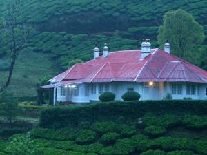 Tea Meadows