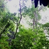 Cueva De Quebrada Del Toro