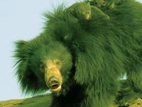 Daroji Bear Sanctuary