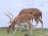 Deer At Ranthambhore National Park