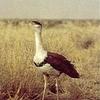 Bird At Desert National Park
