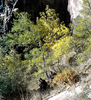 East Rim Trail - Zion - Utah - USA