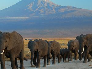 Porini Kenya Experience 5 Days Photos