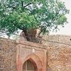 Entrance Gate To Salimgarh Fort