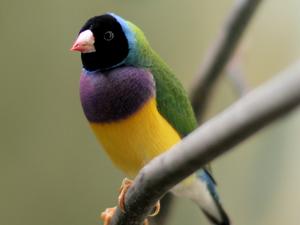 Yinberrie Hills Important Bird Area