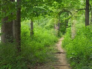 Gneiss Creek Trail