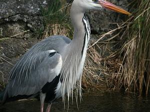 Sur Sarovar Bird Sanctuary