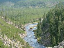 Gibbon River View