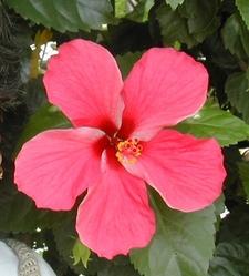 Hemkund Flower
