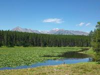 Heron Pond Swan Lake Trail