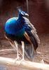 Sri Venkateswara Zoological Park