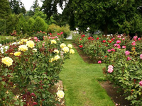 International Rose Test Garden