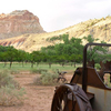 Johnson Orchard - Capitol Reef - USA