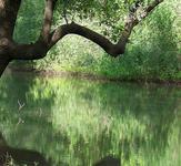 Little Brazos River