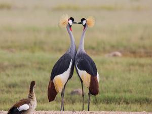 Marvels of Amboseli Photos
