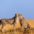 Kenya Tourist Attractions - Tourism in Kenya