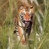 Madhya Pradesh - With Spectacular Wildlife
