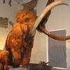 Caffi Museo de Ciencias Naturales