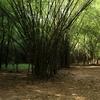 Maredumilli Forest