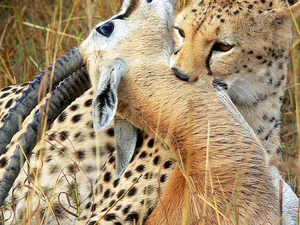 7 Days Masai Mara, Nakuru and Amboseli Package Photos