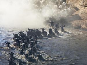 Masai Mara 3 Day Safari - Annual Wildebeest Migration Photos