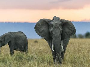 Kenya September & October Offers Photos
