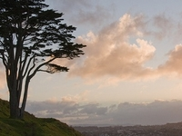 Mount Wellington