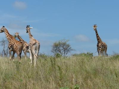 Mwea National Reserve