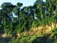 Manú River